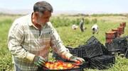 ایجاد ۱۸ هزار شغل در بخش کشاورزی استان کردستان توسط بنیاد برکت ستاد اجرایی فرمان امام