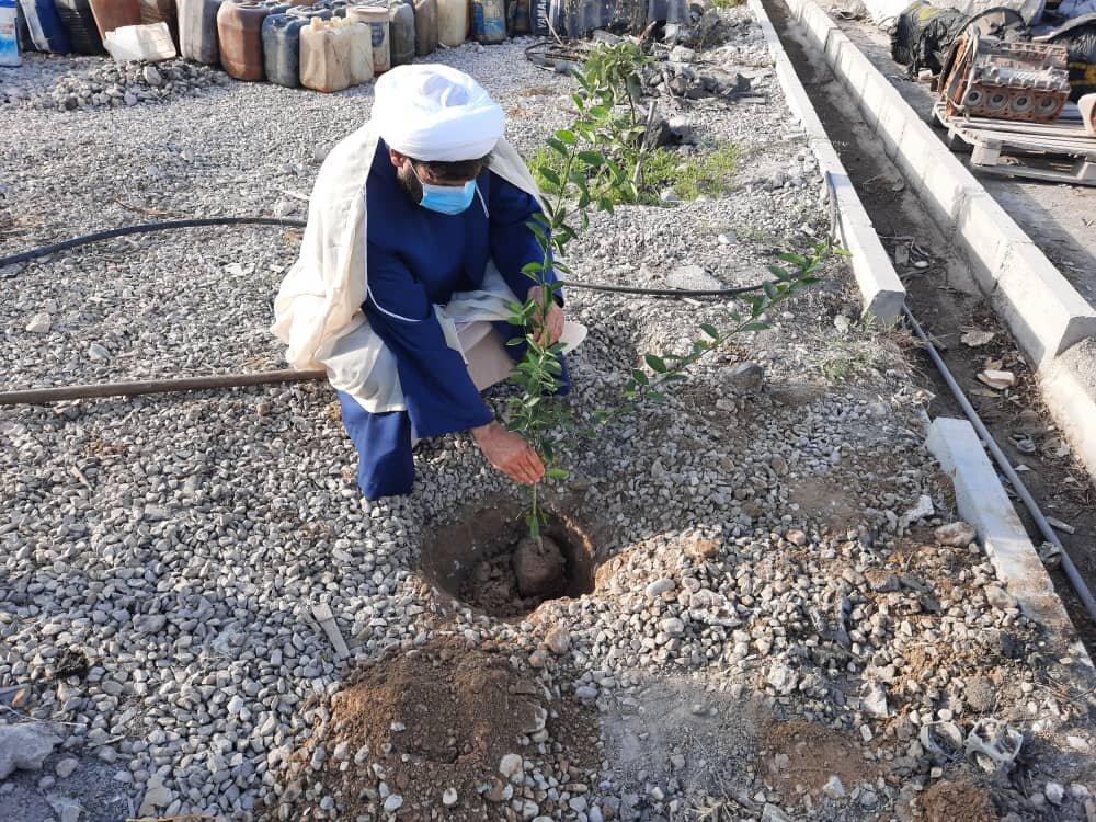 در روز درخت کاری و آغاز هفته منابع طبیعی