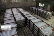واردات محموله ۳ میلیونی سرم تزریقی به کشور توسط گروه دارویی برکت / ۴۸۰ هزار سرم امروز تحویل وزارت بهداشت میشود