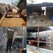 گزارش تسهیلگران دشتستان